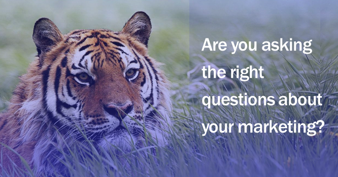 Are you asking the right marketing questions?